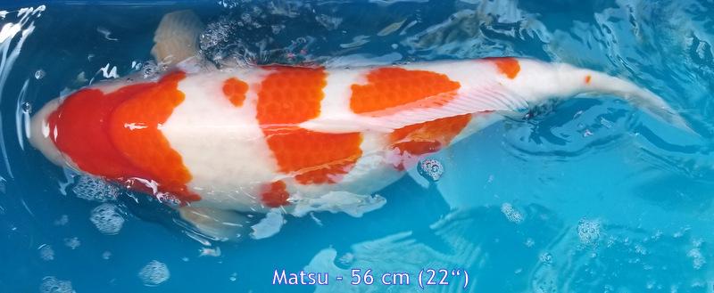 Matsu 6818